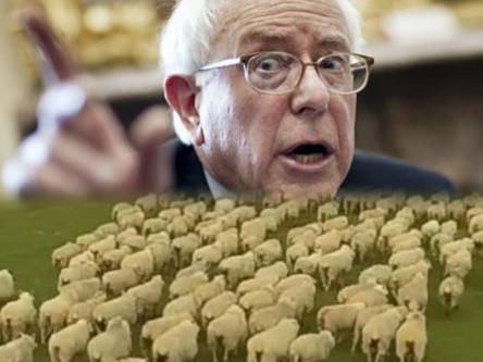 Presidential Candidate Bernie Sanders: Sheepdogging for Hillary and the Democrats in 2016